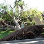 Uprooted Tree SQ