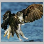eagel with cat FRSQ
