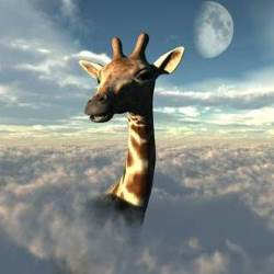 giraffe in clouds