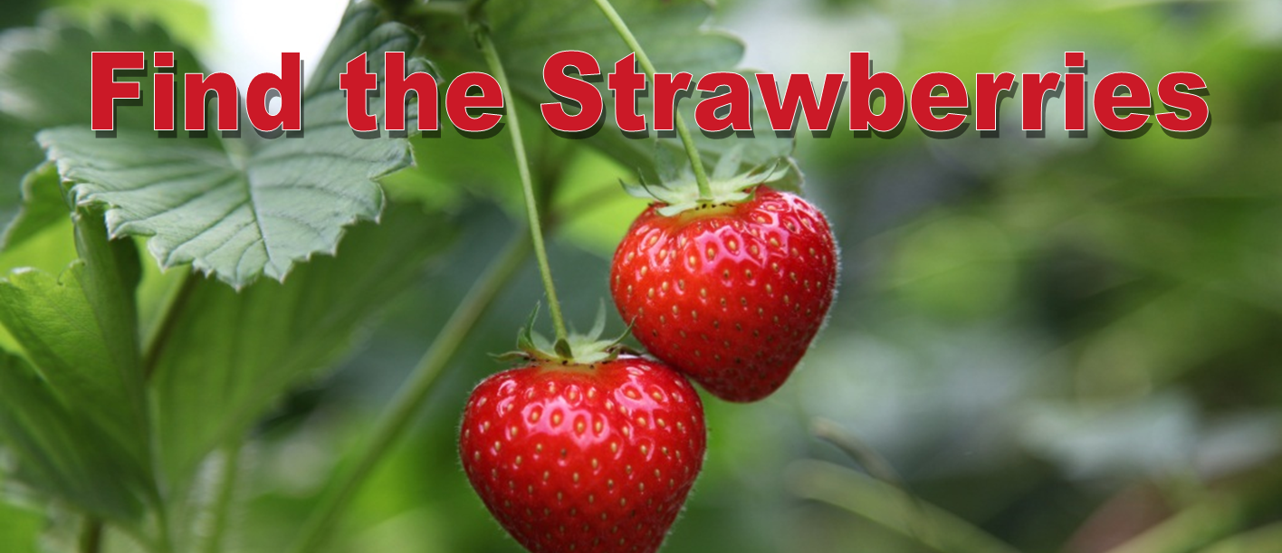 Find the Strawberries